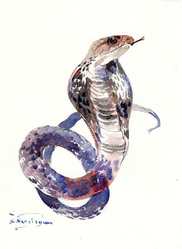 Cobra Snake, original watercolor painting one of a kind snake wall art by ORIGINALONLY on Etsy