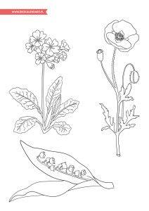 Wiosenny Pakiet Edukacyjny Flower Tattoo Lotus Flower Tattoo Flowers
