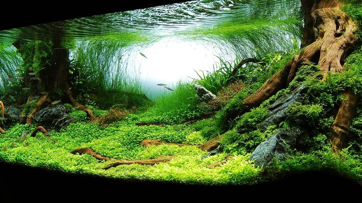 Planted tank aquascaping
