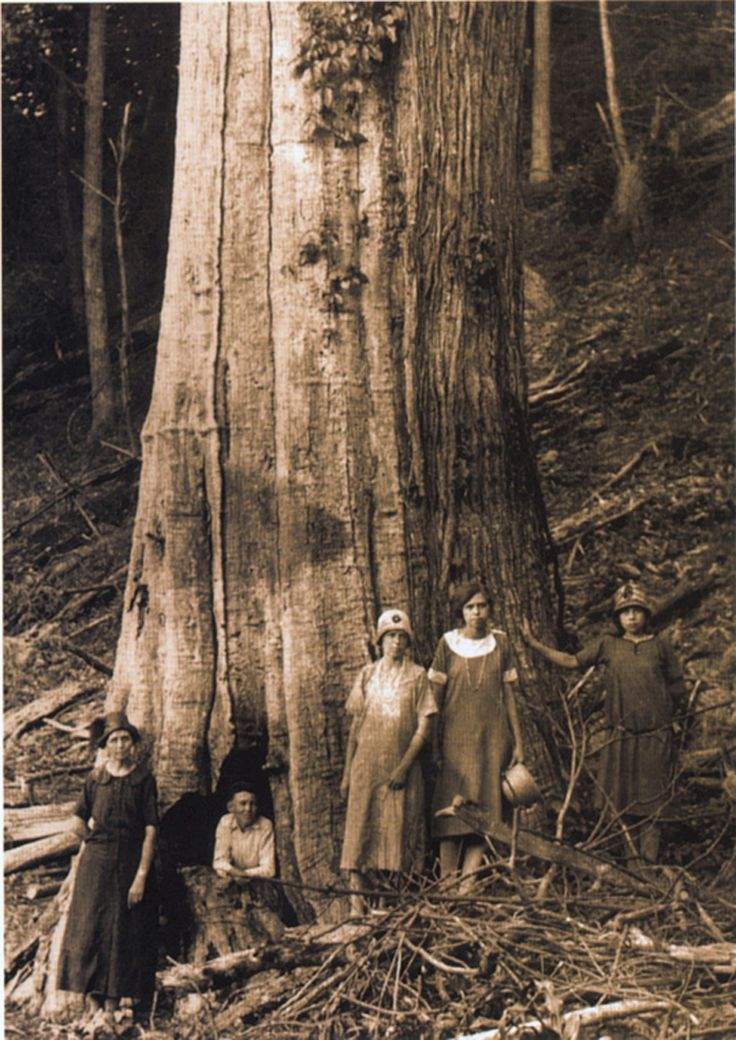 American chestnut tree ~ A family next to an ancient American chestnut in the Great Smoky Mountains National Park in Western North Carolina, before the blight decimated this species.  A rapidly growing, deciduous hardwood tree, the chestnut reached up to 100-150 feet tall and 10 feet in diameter.  Photo credit: Great Smoky Mountains National Park Library and The American Chestnut Foundation.