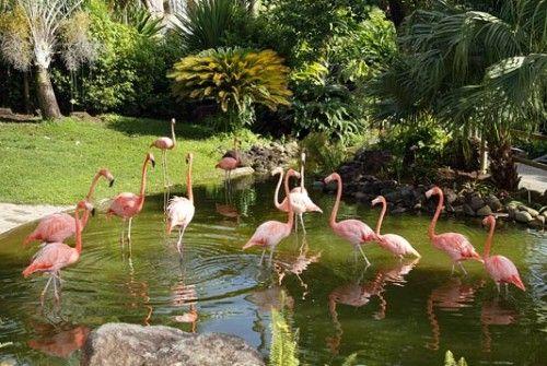 Jardin botanique Deshaies Guadeloupe