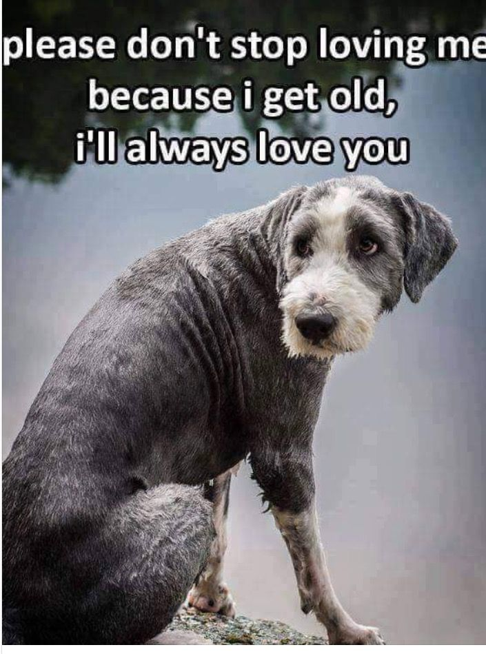 ❤️❤️ PLEASE DON'T ABANDON YOUR OLD PET !!
