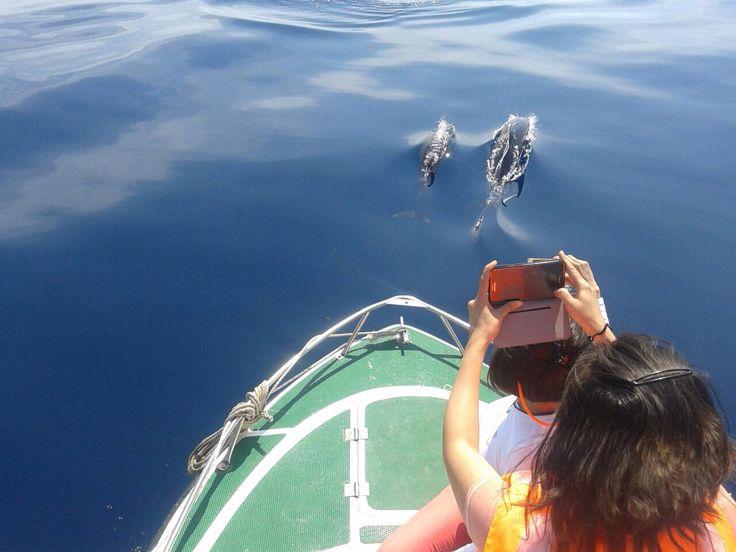 Dolphin at Maratua Island
