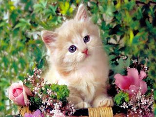 HD Wallpapers Cute Cat