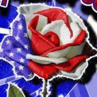 American Flag Rose