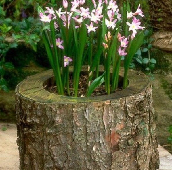 Tree stump planter outdoor decorating landscape ideas for Yard planter ideas