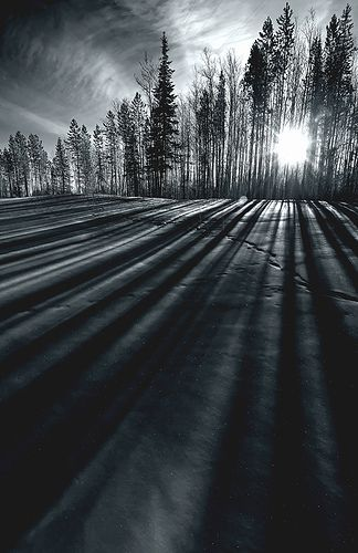Beautiful light and shadows in this photo by Dan Newcomb Photography | Lines -