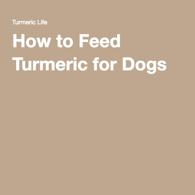 how to make turmeric paste for my cat