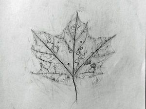 decay leaf rub.jpg