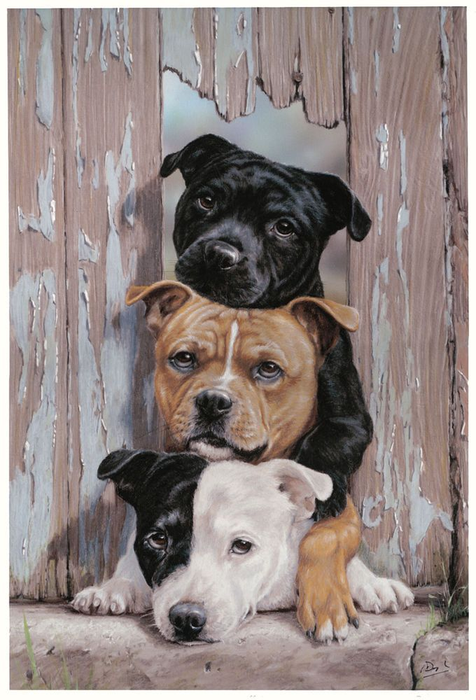 STAFFORDSHIRE BULL TERRIER DOG LIMITED EDITION PRINT  Over Staffed by Paul Doyle
