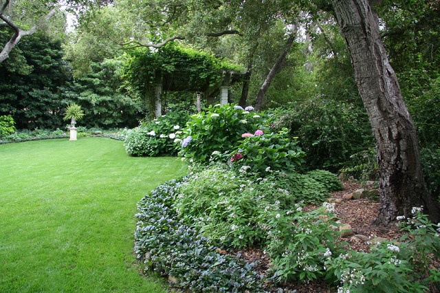 Back yard shade garden using classic garden favorites, including Hydrangea, Heliotrope and Ajuga.