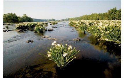 We enjoy hiking picnicing and fishing at landsford canal for Catawba river fishing