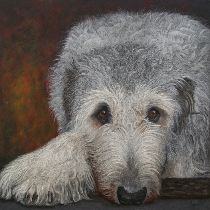 17 Best images about Irish Wolfhounds on Pinterest ...  Deerhounds