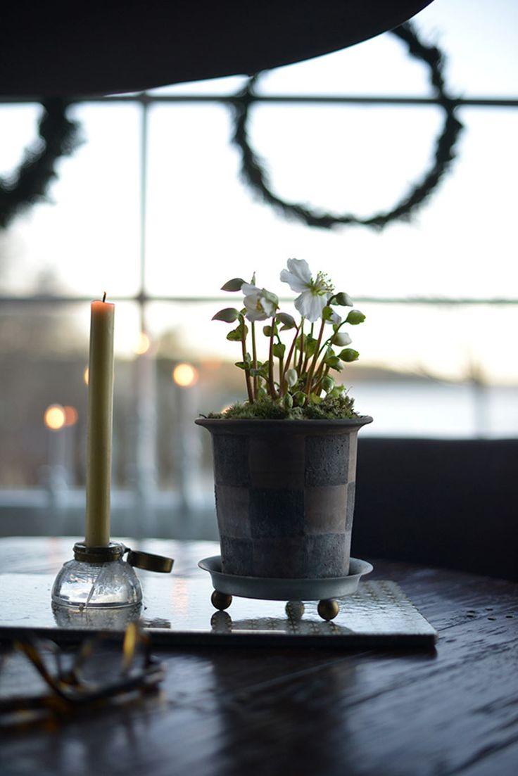 Julrosor ute och inne | Zetas Trädgård