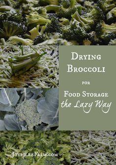 Drying Broccoli for Food Storage the Lazy Way -- Joybilee Farm