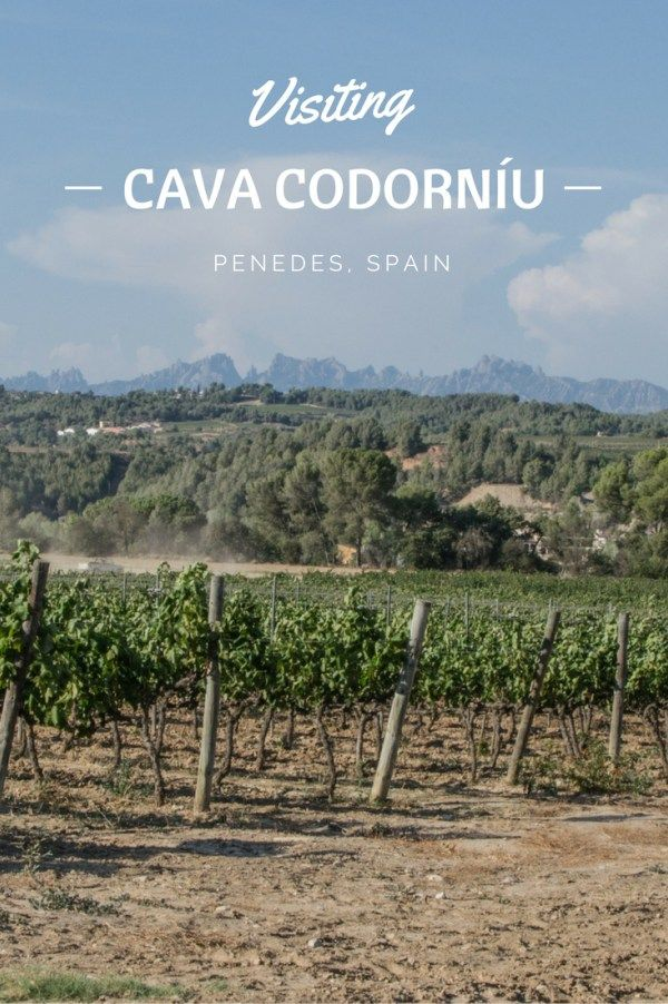 Wine Trip to Penedès: Visiting Cava Codorníu