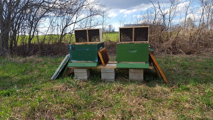 How To Set Up Your First Beehive Bee hive plans, Bee