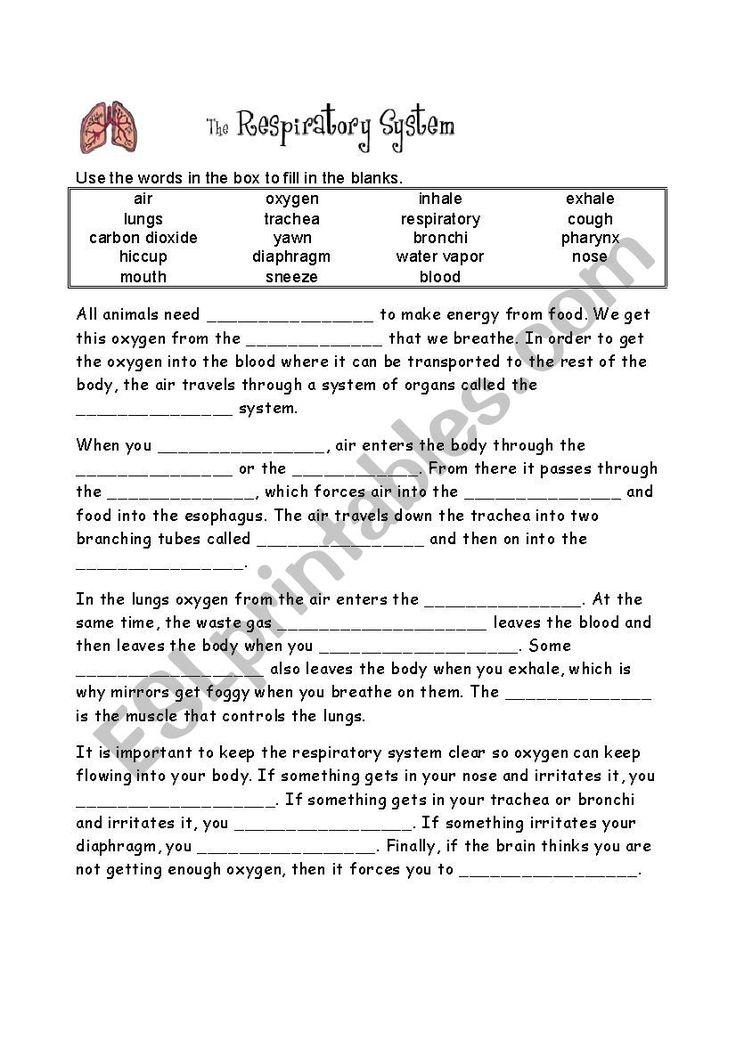 The Respiratory System Worksheet Respiratory System Body Systems Worksheets Respiratory System Activities