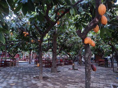 PERGIPEDIA  - Wisata Seru Bersama Keluarga di Wisata Edukasi Kampung Coklat Blitar . Tidak hanya ...