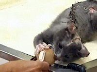 Cat Getting the Most Brutal Torture is Rescued by an Iraq War Veteran - Watch the Video