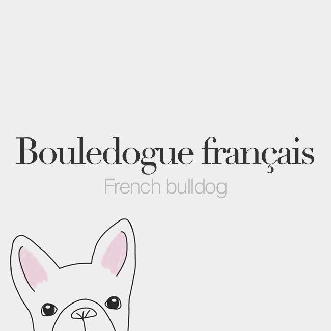 Bouledogue français (masculine word)| French bulldog | /bul.dɔg fʁɑ̃.sɛ/