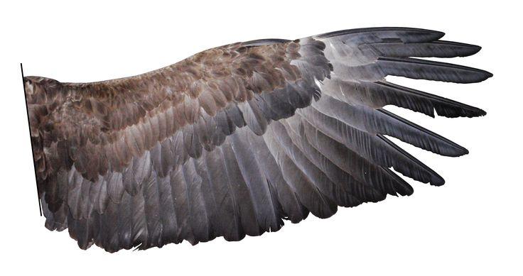крылья птицы - Поиск в Google