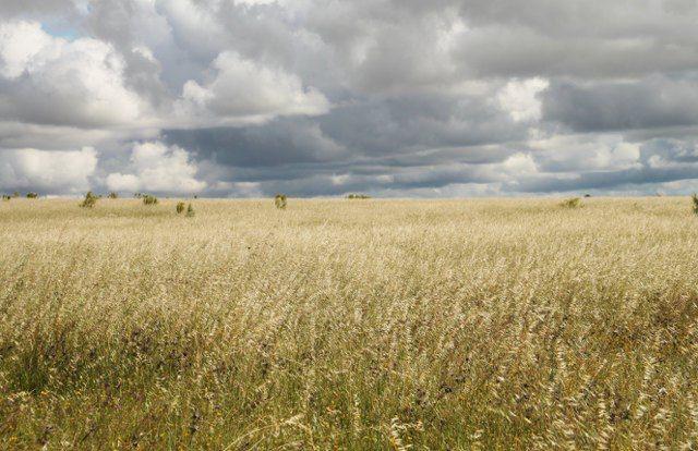 Plains os Cáceres in summer. Llanos de Cáceres in summer. Extremadura, Spain. Espacios Naturales de Extremadura