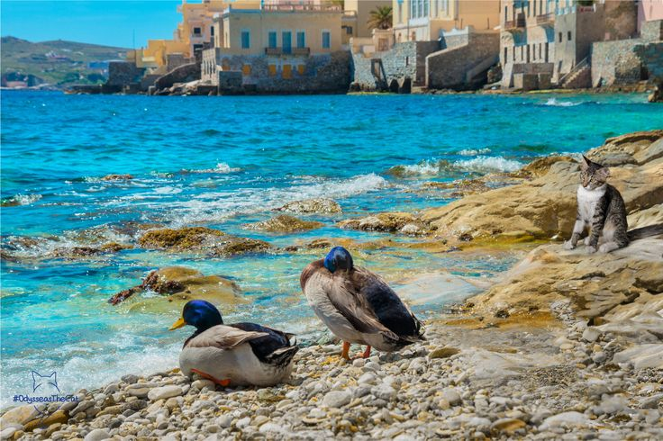 Nothing is better in Syros than hanging out with your friends on the beach. Even if you are #OdysseasTheCat! #Syros