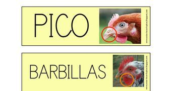 VOCABULARIO MAMÁ GALLINA.pdf