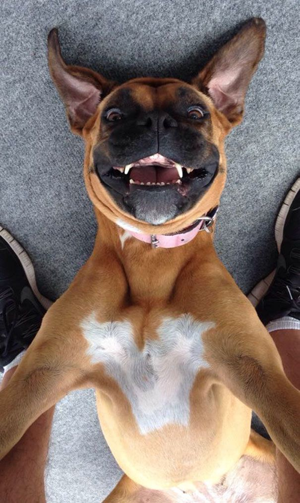 20 animal selfies that will SERIOUSLY make your day! <3
