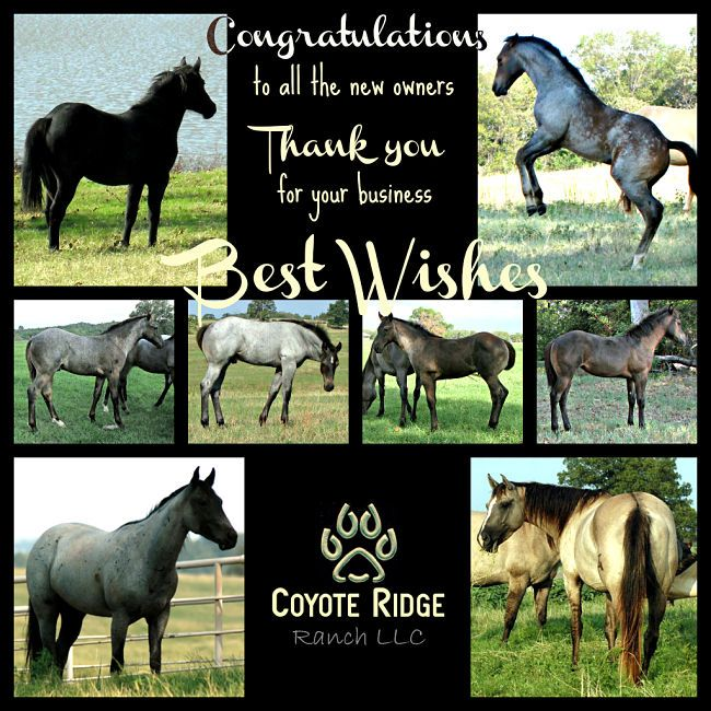 Coyote Ridge Ranch LLC--Blue Valentine bred horses for sale, roan horses for sale, roping horses for sale, ranch horses for sale, mounted shooting horses for sale, rodeo horses for sale, family horses for sale