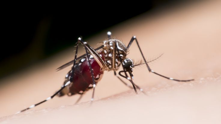 EPA Approves 'Killer' Mosquitoes To Fight Disease  #dengue #EPA #medicine #mosquito #mosquitomate #zika #Disease #hospital #medicine #health #fitness #prevent #update #technews #tech #GCP #NatureBoy #AHSCult #ThisIsUs #GoKingsGo #SDLive #PrideOfBritain #280characters #ParadisePapers #TuesdayThoughts #CharityTuesday #MyBodyLanguageSays #thedrum #CAXIvENG #meanjin280 #Medicaid #Flames #Victorian