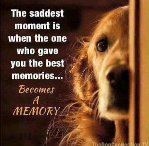 The saddest moment...... http://beverleyshiller.tumblr.com/post/51222789098/hungariansoul