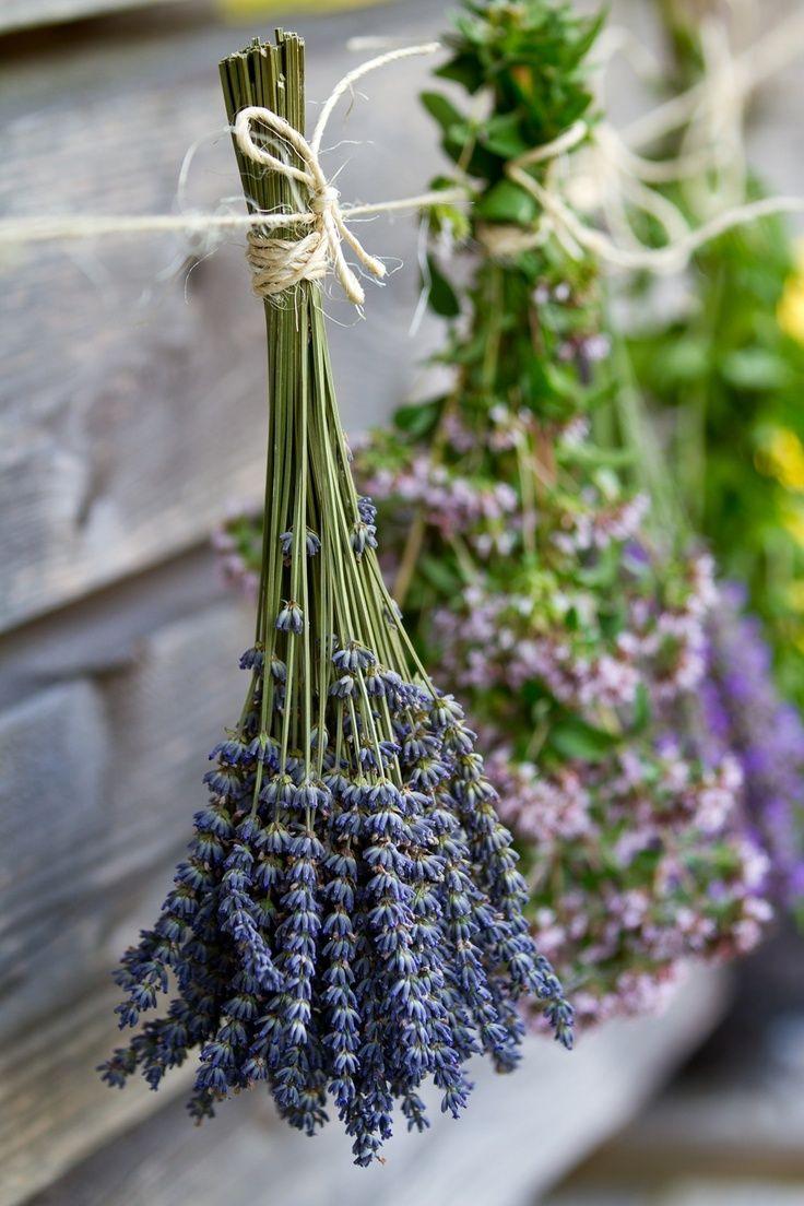 Drying lavender het drogen van lavendel Lavendel hängt zum Trocknen auf der Leine.