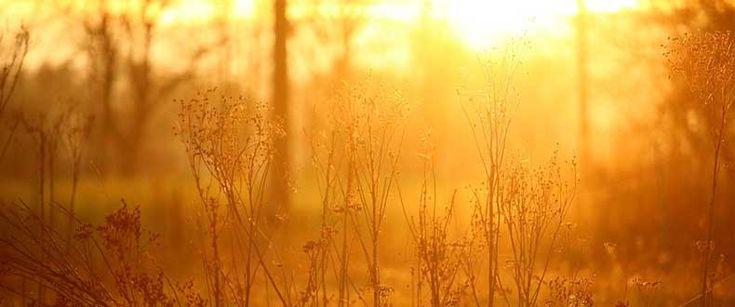 Con luce ambientale si intende qualsiasi tipo di luce naturale usata per illuminare una scena: inclusa sia la luce solare che l'illuminazione domestica