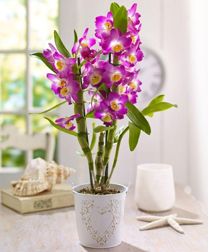 Zimmerpflanzen Schöne Dekoideen Orchideen Pflegen Lila Blüten
