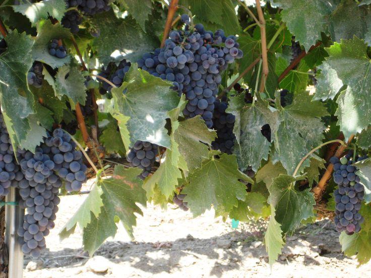 Pechanga casino wine tasting