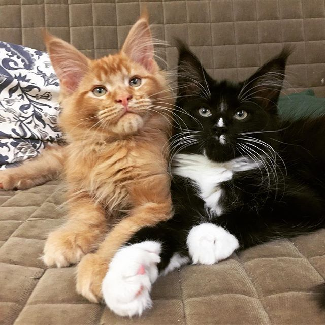 Брат и сестра🐯🐯🐾😽❤️ Brother and sister 🐯🐯😽🐾❤️