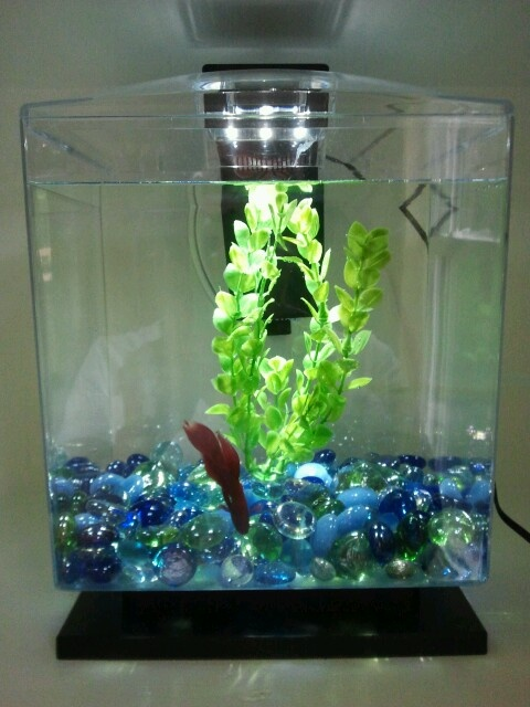 5 Gallon Fish Tank 0 5 Aqua Culture Betta View Aquarium