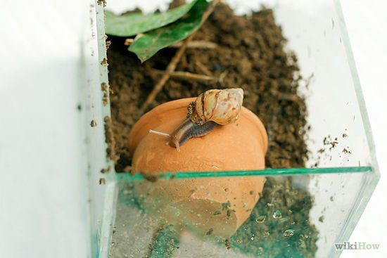 how to make a snail habitat