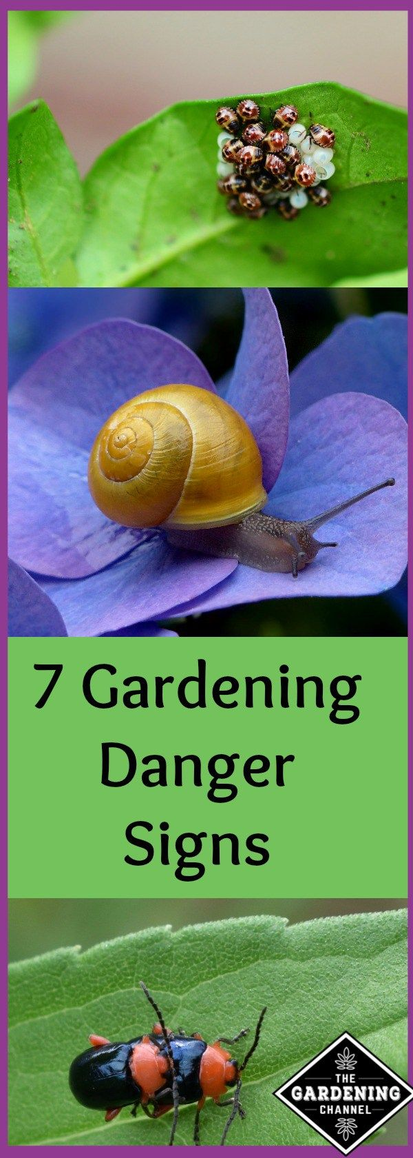 Gardening danger signs to look for, some are apparent in the winter.  Be on the lookout before spring planting.  Save your vegetables from these pests before it's too late.