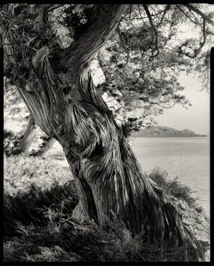 "Saatchi Art Artist Lefteris Miaoulis; Photography, ""Cedar tree, Paros, Greece"" #art"
