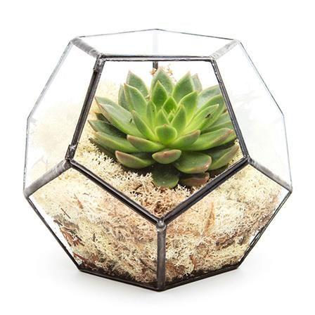 Aztec Penta Terrarium with Plant