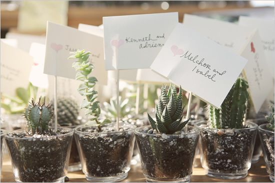 succulent wedding favors in little shot glasses. so cute.