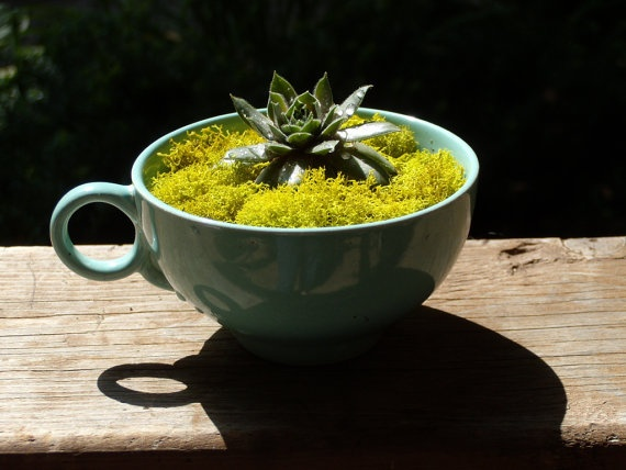 tea cup container garden: Teacups Gardens, Container Garden
