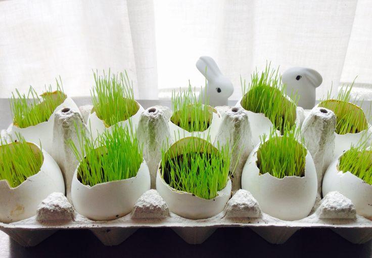Easter - grass - pääsiäinen - rairuoho @ Stina Tuominen