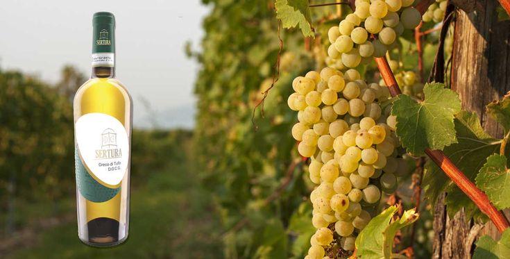 """""""Dalla terra fino alla bottiglia è la passione, l'amore per il proprio lavoro a orientare l'operato dell'azienda vinicola Sertura""""."""
