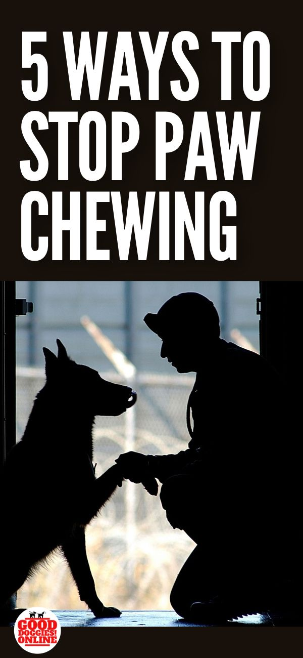 5 Ways How To Stop A Dog From Chewing Paws Dog Chewing Paws Dog Care Dog Paw Care
