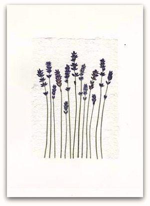 lavender line