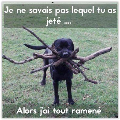 Mon chien c'est le meilleur ! http://www.15heures.com/photos/XKr8 #LOL